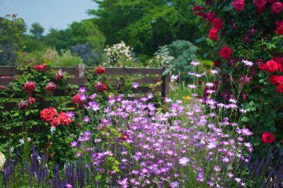 青バラの花言葉の意味や品種は?花束の値段や購入店も