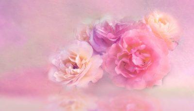 バラの本数の意味や花言葉は?彼女との記念日やプロポーズにおすすめなのはどれ?