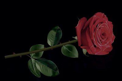 黒いバラの花言葉の意味や由来!品種や花束の値段はいくら?