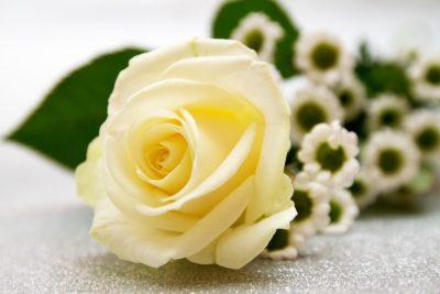 白いバラの花言葉の意味や値段は?