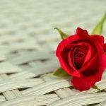 赤いのバラの花言葉の意味や品種は?花束の値段はいくら?