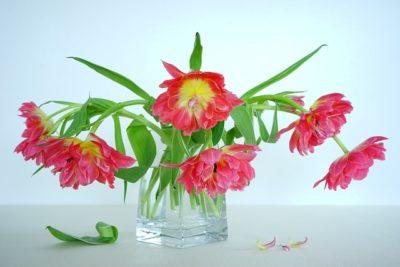桜の花言葉の意味は忘れないで以外にも?由来をソメイヨシノなど品種別に紹介
