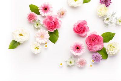 花言葉で健康を願う意味を持つ花は?回復や長生き(長寿)などのおすすめ