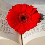 ガーベラの花言葉には感謝や卒業の意味も?赤やピンク・白など色別に紹介