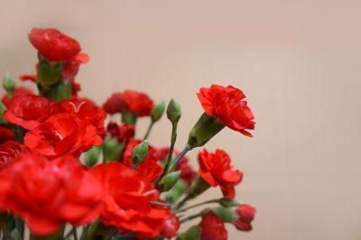 母の日の花言葉!親への感謝や親愛を伝えるのにぴったりの意味を持つ花はどれ?