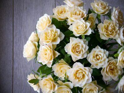 父の日に贈る花で父親への感謝や愛を伝える花言葉はどれ?由来や意味も紹介